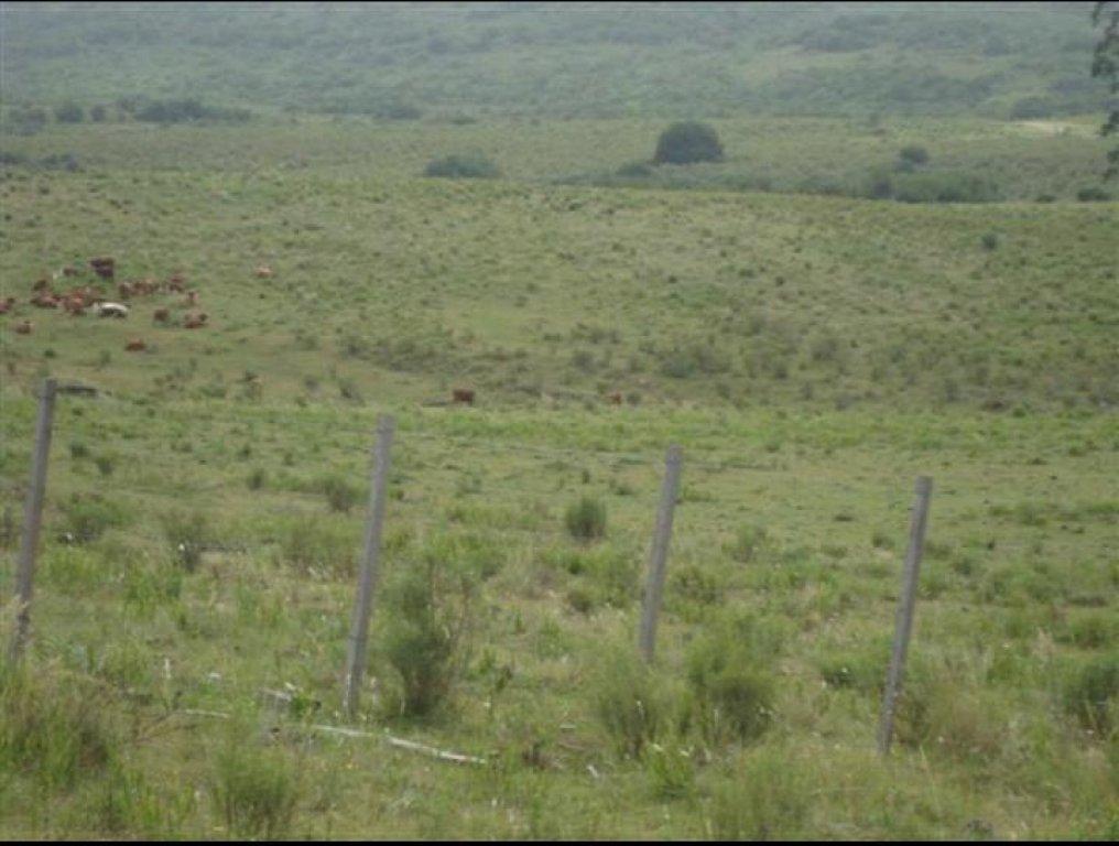 Campo Ref.6784 - Campo de 95 has cerca de aigua departamento de Maldonado