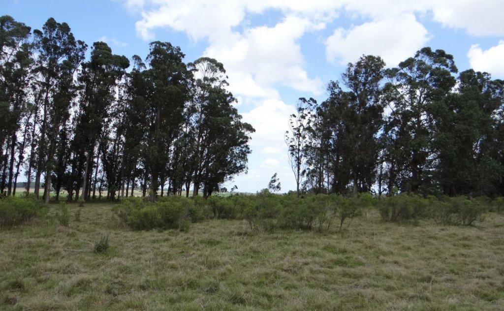 Chacra ID.6054 - Venta chacra ubicada en Medellin Chico (Camino que une Ruta 104 con la Boya Petrolera)