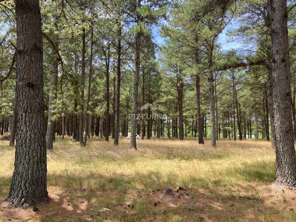 Terreno Ref.306 - terreno en chacras del pinar 2000 m2 , excelente  ubicacion , listo para construir .