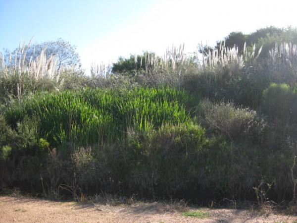 Terreno en Venta en Punta del Este El Chorro