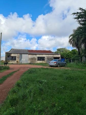 venta y alquiler de terreno de 1800 y local de 800 m2 en maldonado, ideal para barraca, distribuidora, fraccionar, construir en altura - gor21851l